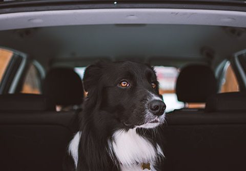 traveling with a dog in your Toyota