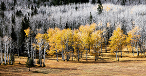 Change of color in the Black Hills of South Dakota